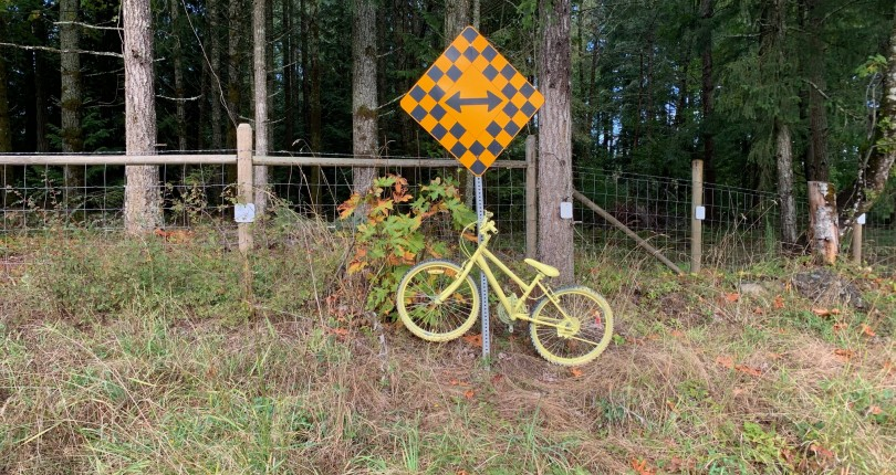 I Gotta Ask, have you seen the Yellow Bicycles Blossom in the Boonies?